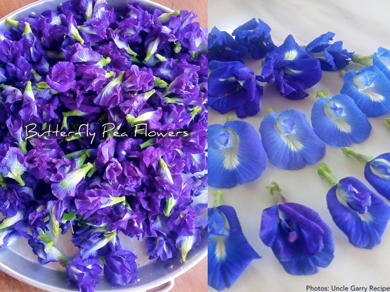 butterflypeaflowers